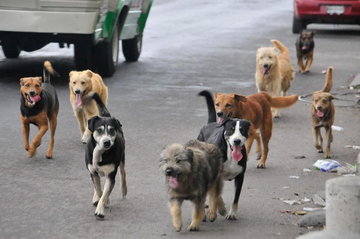El Hospital Centenario atendió 263 casos de mordeduras de perros en lo que va del año